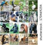 different animals in zoo | Shutterstock . vector #170469254