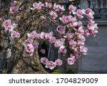 Magnolia Blossom Flower Tree...