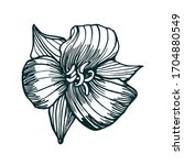 flower hand drawing isolated on ... | Shutterstock .eps vector #1704880549
