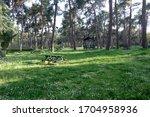 Empty Picnic Area In A Pine...