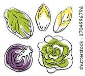 swiss chard  lettuce  belgian... | Shutterstock .eps vector #1704996796