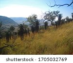 Sloping Hill With Mountain Alo...