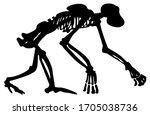 Skeleton Silhouette Of An...
