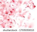 apricot flower flying petals... | Shutterstock .eps vector #1705050010