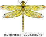Yellow Dragonfly With Delicate...