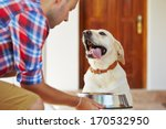 Stock photo hungry labrador retriever is waiting for feeding 170532950