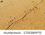 Lizard Track On The Beach In...