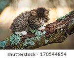 Stock photo little tabby kitten sitting on the tree 170544854