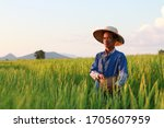 Asian Farmer Working On Rice...
