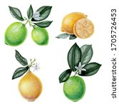 Limes And Lemons With Green...