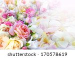 Stock photo roses flowers and petals background 170578619