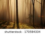foggy  sunrise in the  forest | Shutterstock . vector #170584334