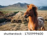 A Brown Horse Stands In A Field....