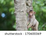 Stock photo close up a shocked monkey on a tree 170600369