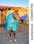 Small photo of Brown horse with caparison in the farm yard in spring sunset.