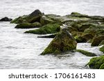 Sea Birds On Rocks Covered With ...