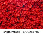 Red Roses Background. Romance...