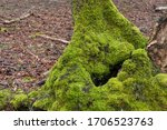 Landscape of moss-covered stump and branches in the forest of Point Defiance Park in Tacoma, Washington