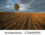 Autumn  In A Plowed Field Tree