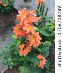 Crossandra Flower Is Also Known ...