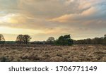Wide heather landscape with...