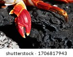 "Grapsus ""red Rock Crab"" On Lav..."