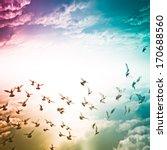 Dove Flying On Blue Sky Freedo...