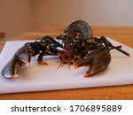 The Freshly Caught Lobster In...