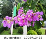 Flowers Nature Butterfly Hut...