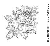 hand drawn rose flower head and ... | Shutterstock .eps vector #1707059326
