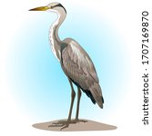 a heron bird on a swamp  with a ...   Shutterstock .eps vector #1707169870