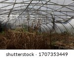 Spooky Abandoned Greenhouse...