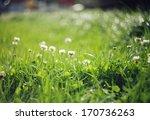 clover flowers on blurred green ... | Shutterstock . vector #170736263