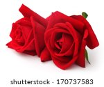 Pair Of Red Roses Over White...