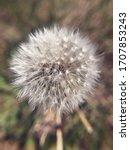 A Close Up Of A Dandelion Puff...
