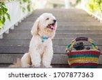 Dog Sitting On Stairs  Dog Sit...