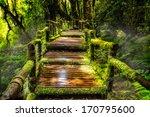 beautiful rain forest at ang ka ... | Shutterstock . vector #170795600