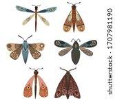Butterfly. Seth Night Moths....
