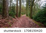 Deep Forest Trail. Forest Trai...
