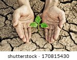 hands holding tree growing on... | Shutterstock . vector #170815430