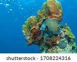 Caribbean Coral Reef Off The...