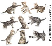 tabby kittens isolated... | Shutterstock . vector #170824478