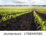Background For Agricultural...