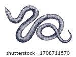 vintage snake vector engraving... | Shutterstock .eps vector #1708711570
