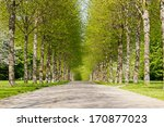 An Alley Of Green Trees During...