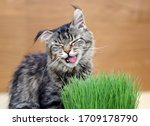 Beautiful Cat Eating And...