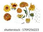 Set Hand Drawn Sunflower...