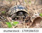 Turtle In Forest  Bulgarian...
