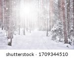 Abstract Snowfall Forest...