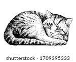 Cat. Wall Sticker. Sketch ...